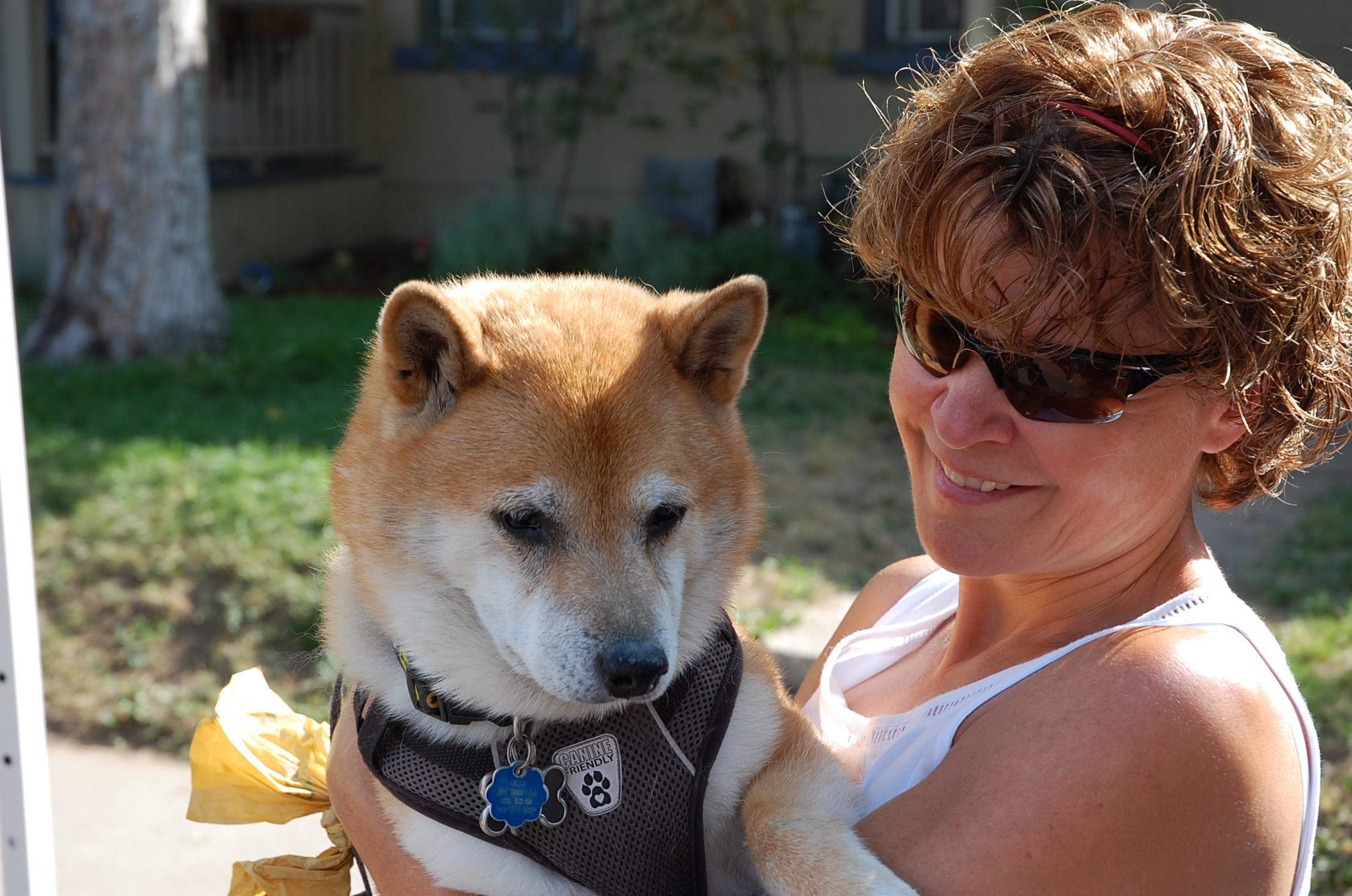so you want a puppy u2026 colorado shiba inu rescue